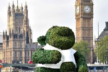 Green Tea Monkey