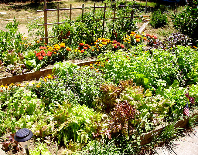 How To Create Your Own Vegetable Garden