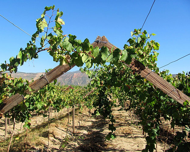 South Africa's leading wine area, Stellenbosch