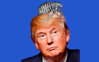 hair of Donald Trump