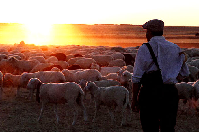 The Shepherd film