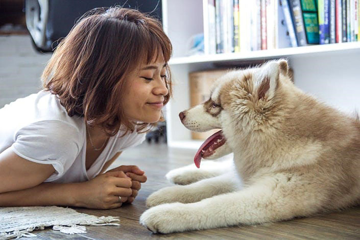 preparing your home for a pet