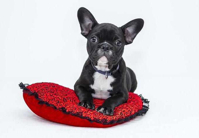 need pet insurance