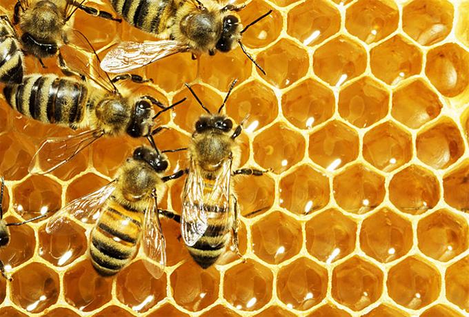 Honey-based products