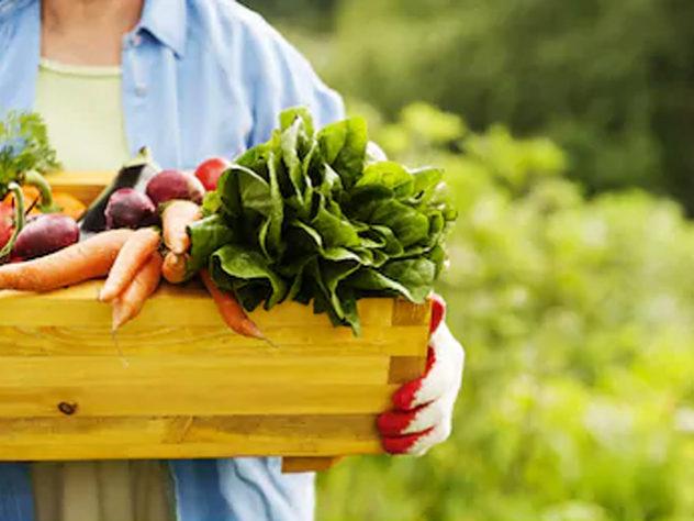 organic food tips