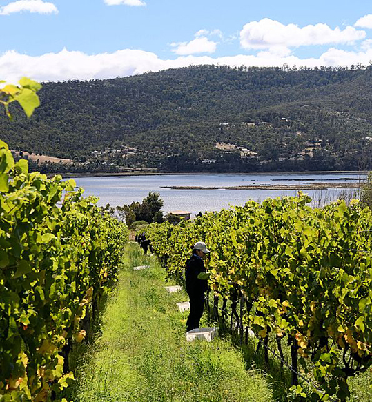 quality wineries in Tasmania