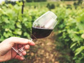best wineries in Tasmania
