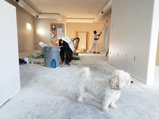 renovate a property