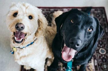 Improve Pets Health