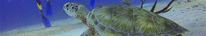 Sea Diving