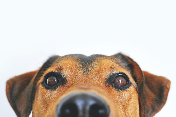 Choosing the Right Dog Breed