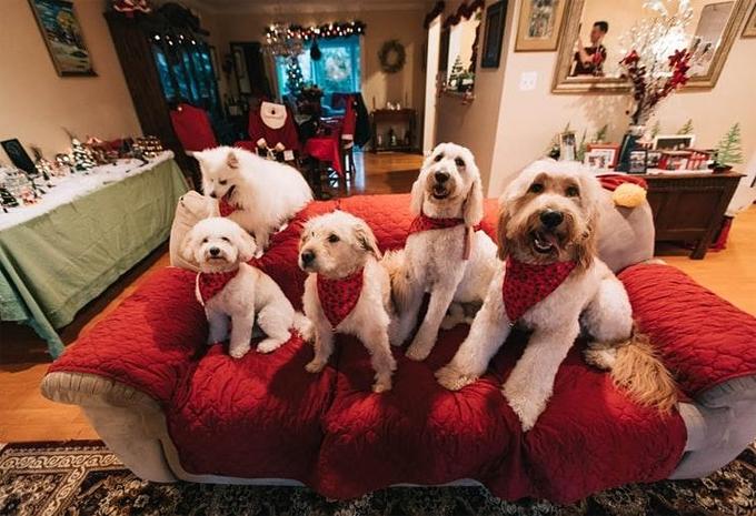 Right family Dog