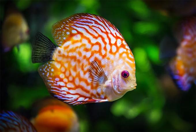 Benefits Keeping Fish