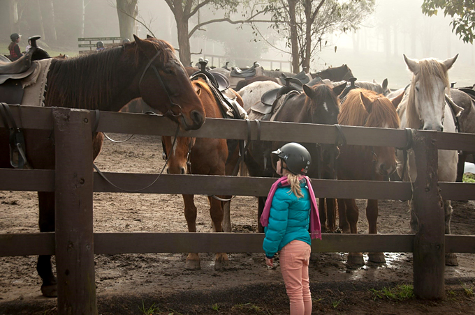 horse breeds for kids