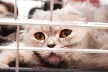 Rehousing a Pet