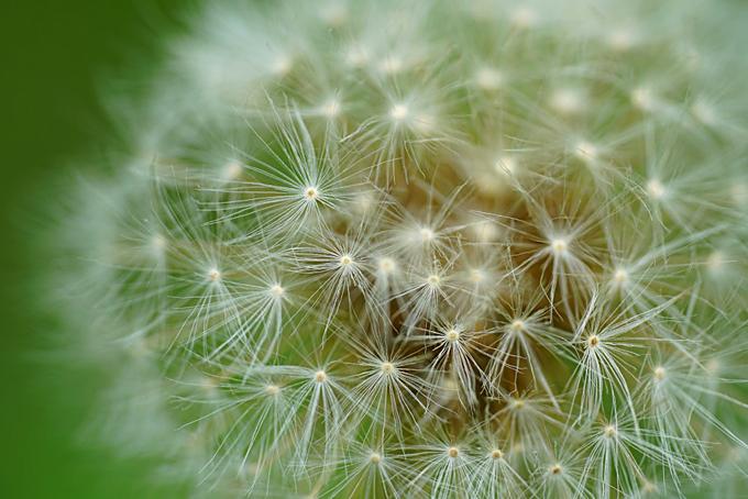 Coping Allergies